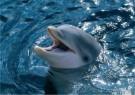 Jan Lens  -  Dolphin - Postcard -  C11831-1