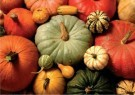Jan Lens  -  Pumpkins - Postcard -  C11835-1