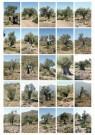 Peter Janssen (1951)  -  Portraits of olive - Postcard -  C11888-1