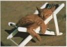 Sipa Press,  -  Sunshine / Cat in sunshine - Postcard -  C2047-1
