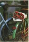 Tjalf Sparnaay (1954)  -  Tulpen uit Amsterdam II - Postcard -  C2138-1