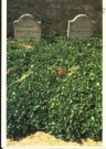 Paul Huf (1924-2002)  -  Grave-yard, Vincent van Gogh - Postcard -  C2968-1