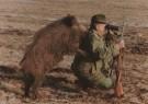 Sandor Szabo  -  Wild-Boar hunting - Postcard -  C5319-1