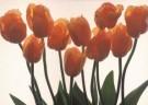 Paul Huf (1924-2002)  -  Flower power no 65 - Postcard -  C5440-1