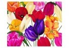 Marianne Furrer  -  A mania for tulips 3 - Postcard -  C6466-1