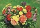 Vicky Bougie  -  V. Bougie/ Flowers. - Postcard -  C7054-1