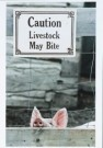 David Chidley  -  Little piglet peeks over his pen not aware off the - Postcard -  C7095-1