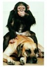 Mike Hollist  -  Dane with chimp pal - Postcard -  C7099-1