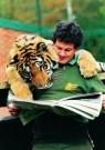 Mike Hollist  -  Tiger bonding. - Postcard -  C7235-1