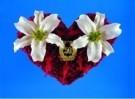 Mirja de Vries  -  Flowerhearts 28 - Postcard -  C7430-1