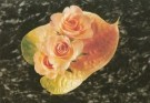 Mirja de Vries  -  Rosae & Anthurium - Postcard -  C7457-1