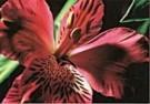 Neil Strassberg  -  Intimacy, IV - Postcard -  C8103-1