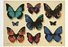 Hans Verhoef (1932)  -  Butterfly dreams - Postcard -  C8126-1