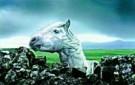 Bob Eshuis  -  Paard - Postcard -  C8221-1