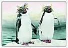 Hans Kahr  -  Zoology 6 - Postcard -  C8738-1