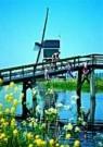 Igno Cuypers  -  Springtime Jumb - Postcard -  C8938-1