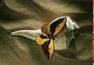 Paul Huf (1924-2002)  -  Naturalis, 1993 - Postcard -  C9332-1