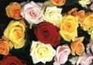 Paul Huf (1924-2002)  -  Bouquet - Postcard -  C9356-1