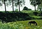 Paul van Riel (1948)  -  Spring in holland - Postcard -  C9422-1