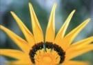 Girma Debebe  -  Sunshine - Postcard -  C9442-1