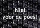 Paul Baars (1949)  -  Niet voor de poes - Postcard -  C9529-1