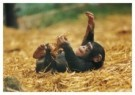 Mike Hollist  -  Hapiness is a Chimp - Postcard -  C9832-1