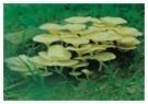 Shymal Basu  -  Life Smiles - Postcard -  C9838-1