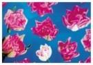 -  Tulpen op blauw - Postcard -  C9903-1