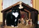Ellen van de Woestijne  -  Sjonnie in de kerststal - Postcard -  D1142-1