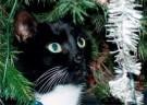 Lana Hogenstijn  -  De kat uit de boom kijken, 2008 - Postcard -  D1143-1