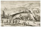 Jacob A. Matham (1571-1631)  -  Stranding potvis - Postcard -  DM043-1