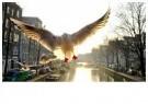 Gerard Schoone  -  Seagulls in the Red-Light-District, Amsterdam #2 - Postcard -  GS002-1