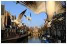 Gerard Schoone  -  Seagulls in the Red-Light-District, Amsterdam #5 - Postcard -  GS005-1