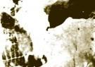 Paul Baars (1949)  -  Figure/ground illusion. Hidden 'Cow's head'. - Postcard -  PB0110-1