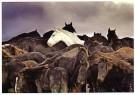 Laurens Aaij  -  L. Aaij/Een kudde paarden - Postcard -  PS1022-1