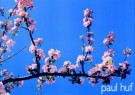 Paul Huf (1924-2002)  -  Paul Huf/Spring in Arles/55*80 - Poster -  PS484-1