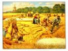 Cornelis Jetses (1873-1955)  -  C.Jetses/Julidag op land/45x60 - Poster -  PS550-1