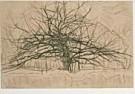 Piet Mondrian (1872-1944)  -  Boom II - Postcard -  QA015-1