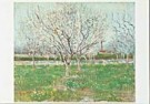 Vincent van Gogh (1853-1890)  -  van Gogh/ Orchards Plumtrees - Postcard -  QA085-1