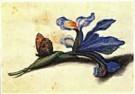 Margaretha de Heer (1603-1665) -  Heer,de /Studieblad met iris - Postcard -  QA150-1
