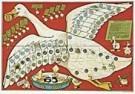 Daan Hoeksema (1879-1935)  -  D.Hoeksema/Ganzenbord/AHM. - Postcard -  QA152-1