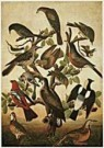 Anoniem,  -  Anonymous/Birds./NGW - Postcard -  QA209-1