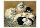 H. Ronner-Knip (1821-1909)  -  Cats and Kittens, 1893 - Wenskaarten-set -  QA381-1