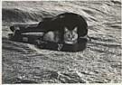 Hilde Vaatstra (1947)  -  Doos van Pandora - Postcard -  QB024-1