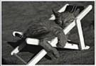 Sipa Press,  -  Sipa Press/ Cat in sunshine - Postcard -  QB028-1