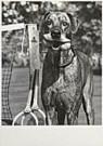 John Drysdale  -  Drysdale/Suns./Dog game tennis - Postcard -  QB066-1