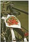 Tjalf Sparnaay (1954)  -  Tulpen uit Amsterdam - Postcard -  QC009-1