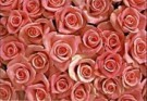 Paul Huf (1924-2002)  -  Flowerpower no.20 - Postcard -  QC013-1