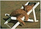 Sipa Press,  -  Cat in sunshine - Postcard -  QC016-1