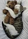 Letizia Volpi  -  The cat's pet - Postcard -  QC018-1